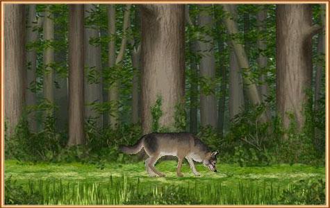 охотиться на волка
