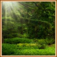 новый лес апеха